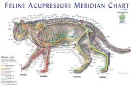 catmeridian